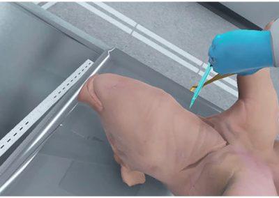 Fetal Pig Dissection
